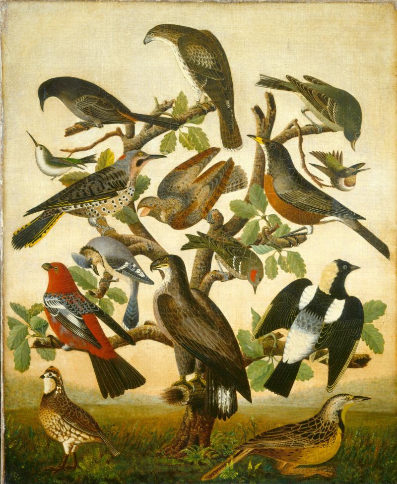 Oiseaux 1840 NGA W